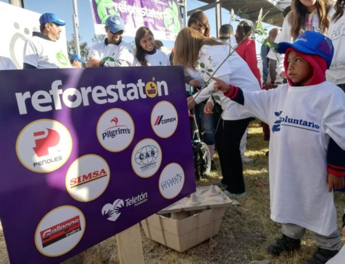 Plantan 520 árboles en Reforestatón 2019issa tafich
